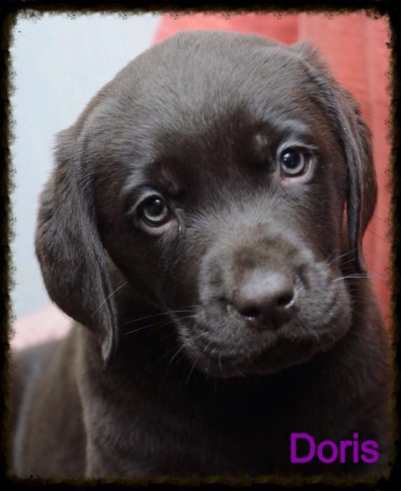 Doris1
