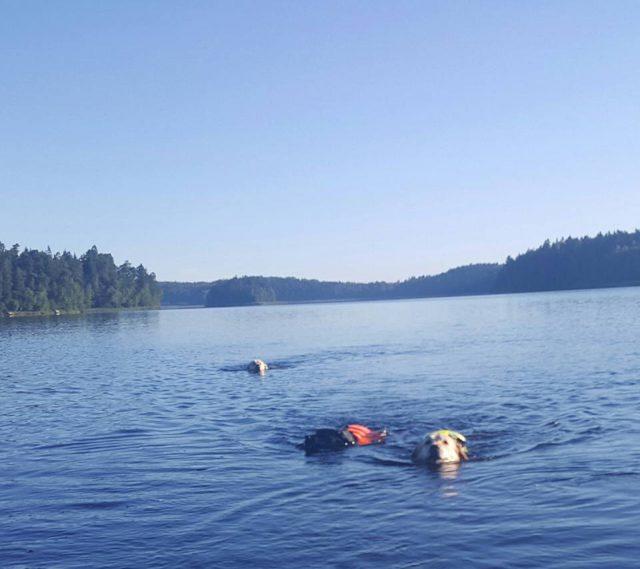 Pojkarna simmar