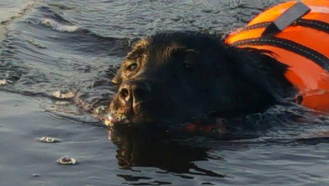 Winna simmar 160726